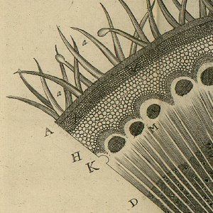 Detail of the print